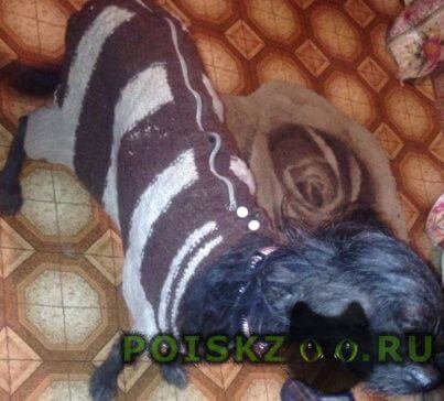 Найдена собака китайская хохлатая девочка г.Москва