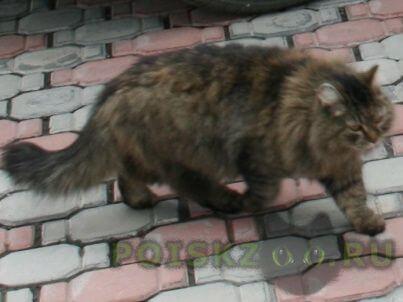 """Пропала кошка """"руся"""" г.Новосибирск"""