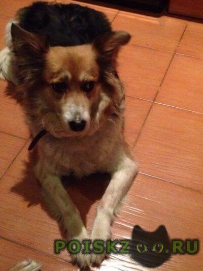 Пропала собака г.Тамбов