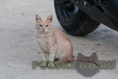 Найден кот на окраине г.Дедовск