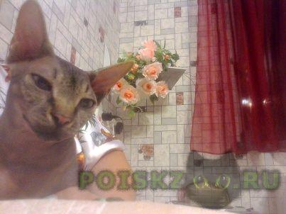 Пропал кот зовут стэфон г.Майкоп (Адыгея)