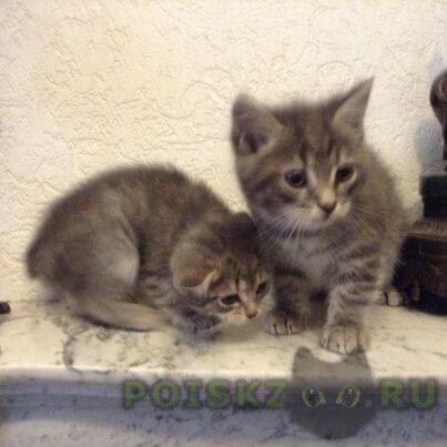 Найдено домашнее животное котята г.Ханты-Мансийск
