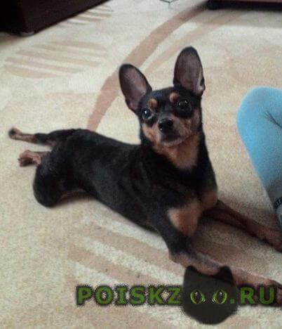 Найдена собака кобель г.Магнитогорск