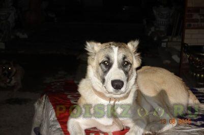 Пропала собака г.Верея