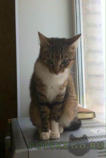 Найдена кошка г.Смоленск