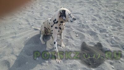 Найдена собака г.Сочи