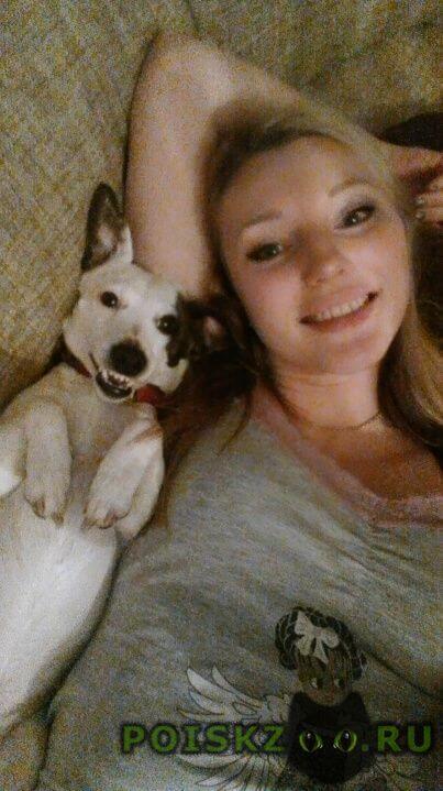 Пропала собака кобель пес г.Оренбург