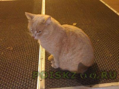 Найден кот г.Казань