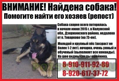 Найдена собака кобель в калужской области г.Калуга