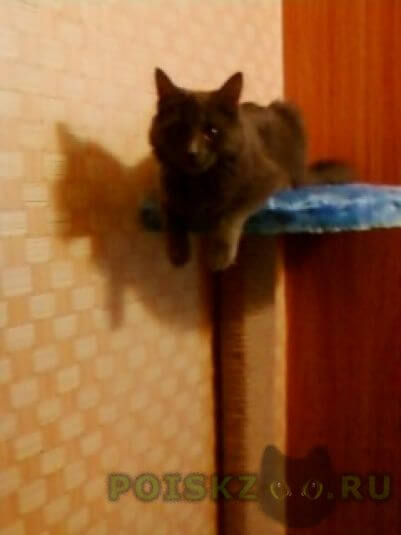 Пропала кошка г.Чехов