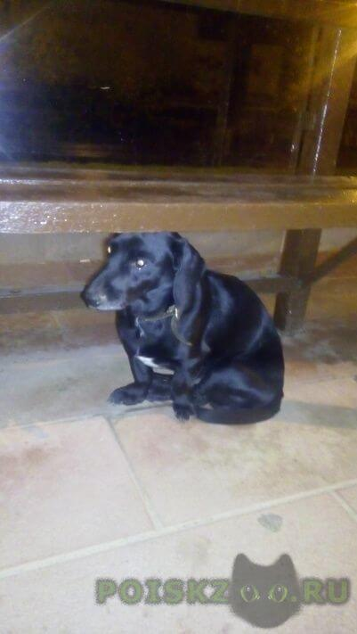 Найдена собака кобель в районе платформы москворечье г.Москва