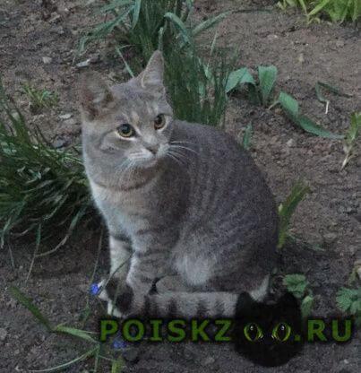 Найдена кошка котик г.Кострома