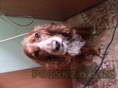Найдена собака кобель г.Сергиев Посад