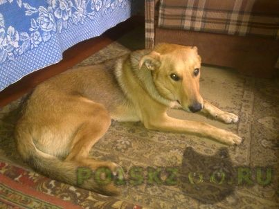Пропала собака кобель г.Тольятти