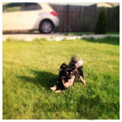 Пропала собака кобель любимый песик  г.Геленджик