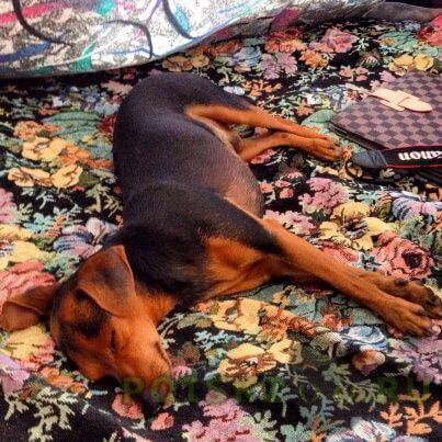 Пропала собака кобель г.Икша