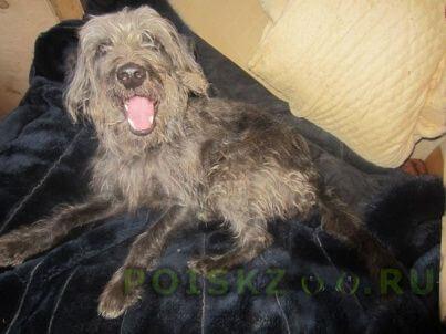 Найдена собака кобель г.Пермь