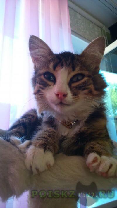Найден котёнок тихон г.Тверь