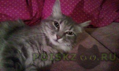 Найдена кошка серо-белая г.Москва