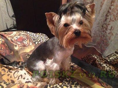 Пропала собака кобель г.Челябинск