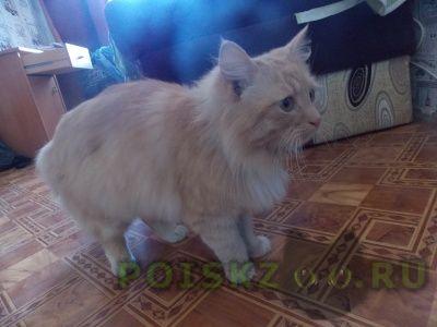 Найден кот г.Симферополь