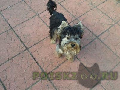 Пропала собака кобель г.Калининград (Кенигсберг)