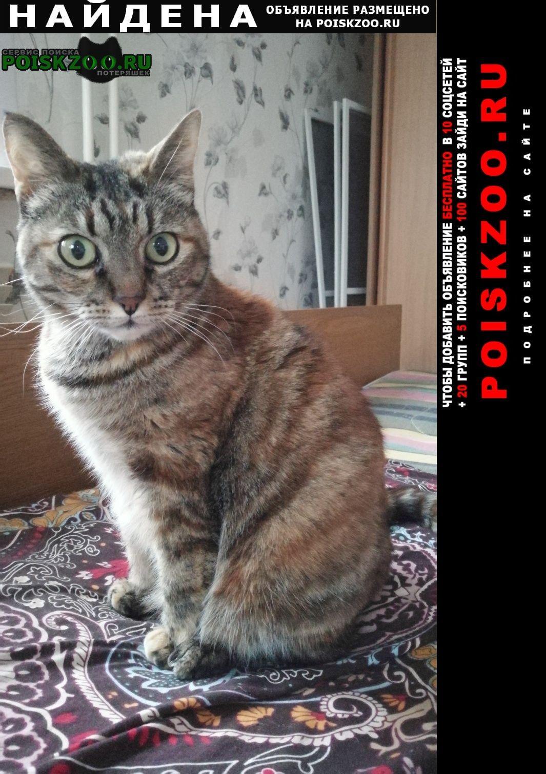 Найдена кошка Ярославль
