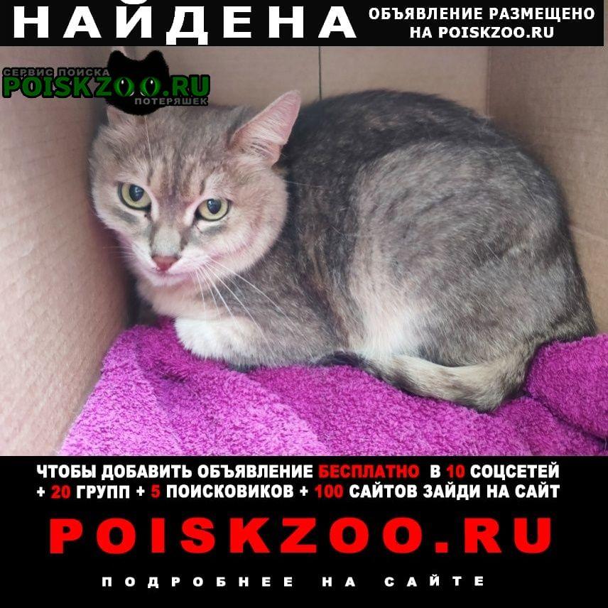 Найдена кошка район войковская, коптево, Москва