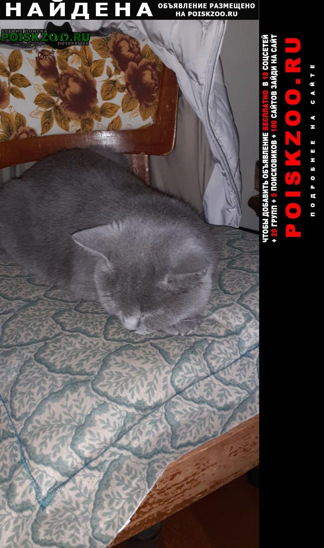 Найдена кошка серая или кот Москва