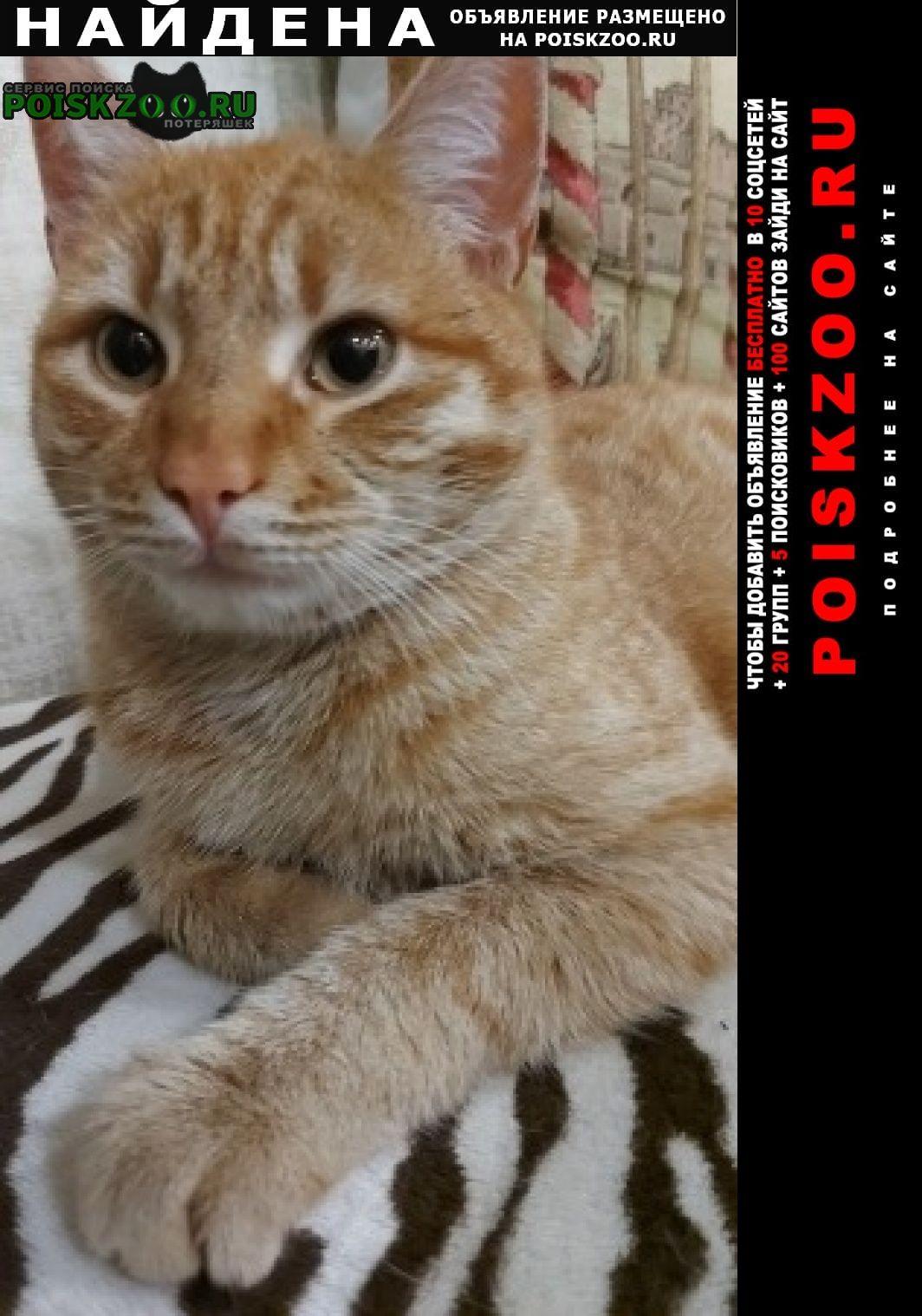 Найден кот Аксай (Ростовская обл.)