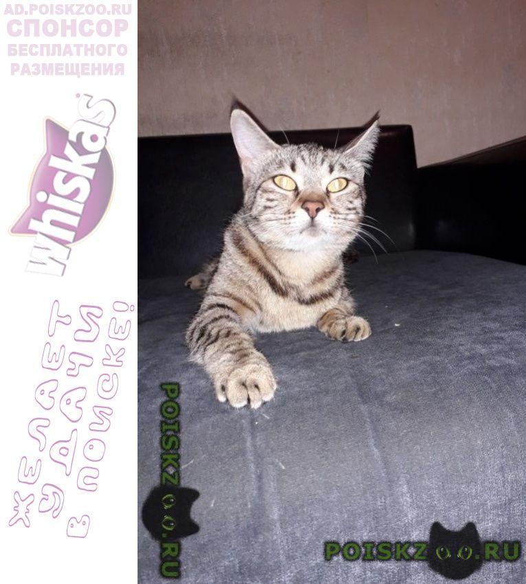 Найдена кошка очень похожа на бенгальскую г.Москва