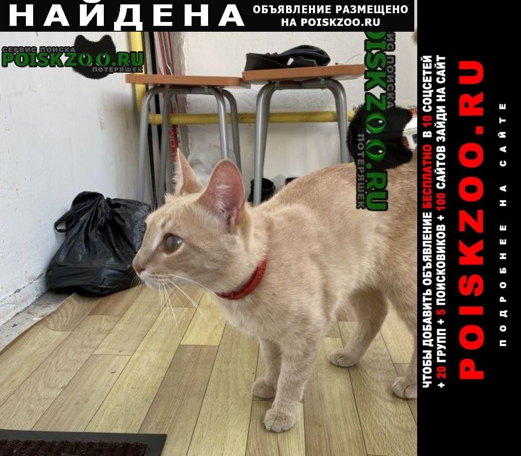 Найден кот рыжий Ульяновск