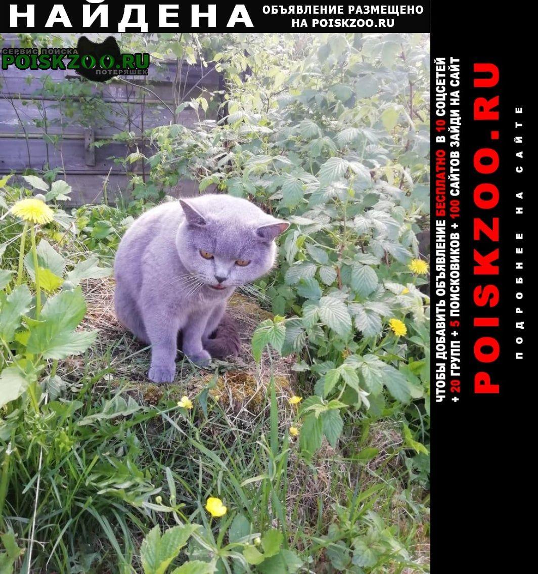 Найдена кошка в полушкино Кубинка