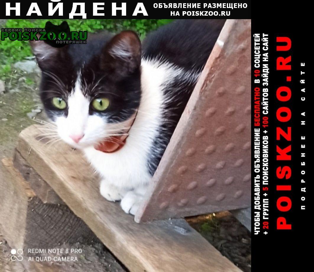 Найдена кошка молодая кошечка Санкт-Петербург