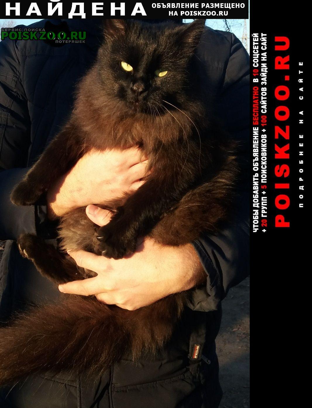 Найдена кошка Пенза