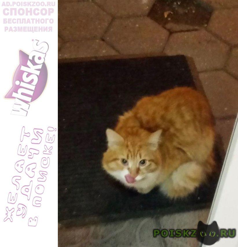 Найдена кошка г.Троицк