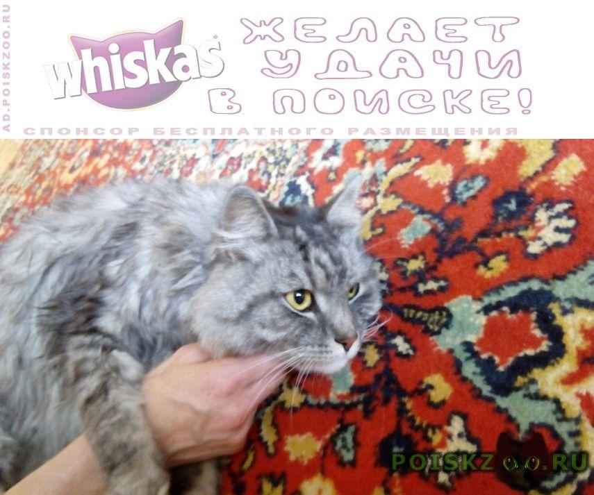 Найден кот г.Москва