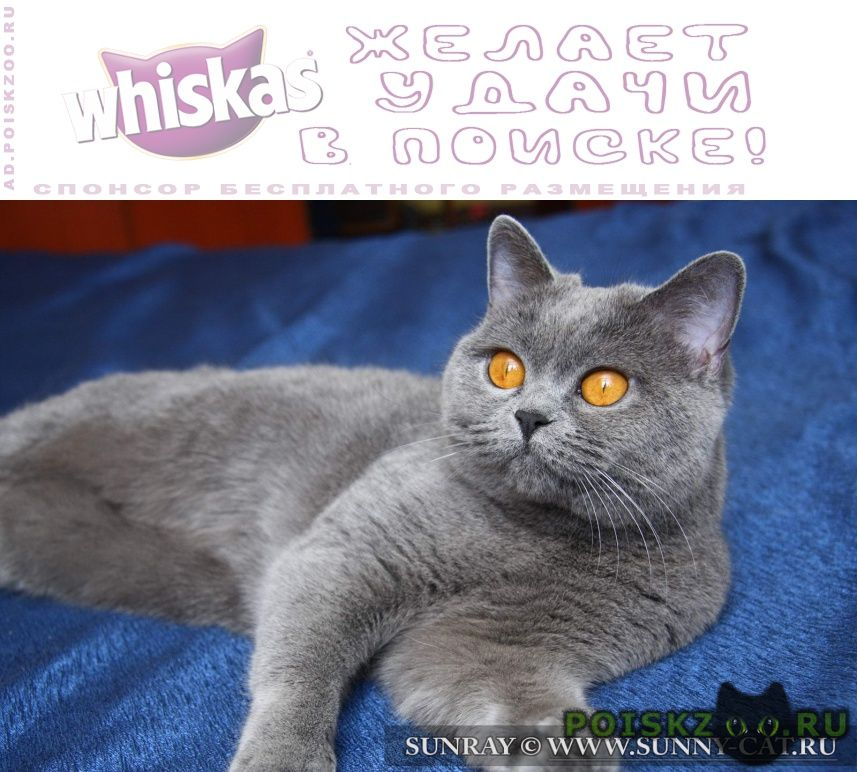 Найдена кошка г.Рязань
