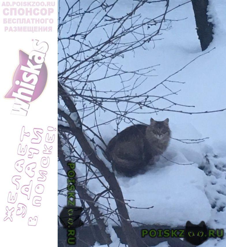 Найдена кошка около деревни троица г.Истра