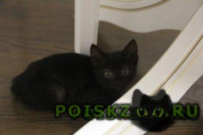 Найдена кошка кошечка г.Саратов