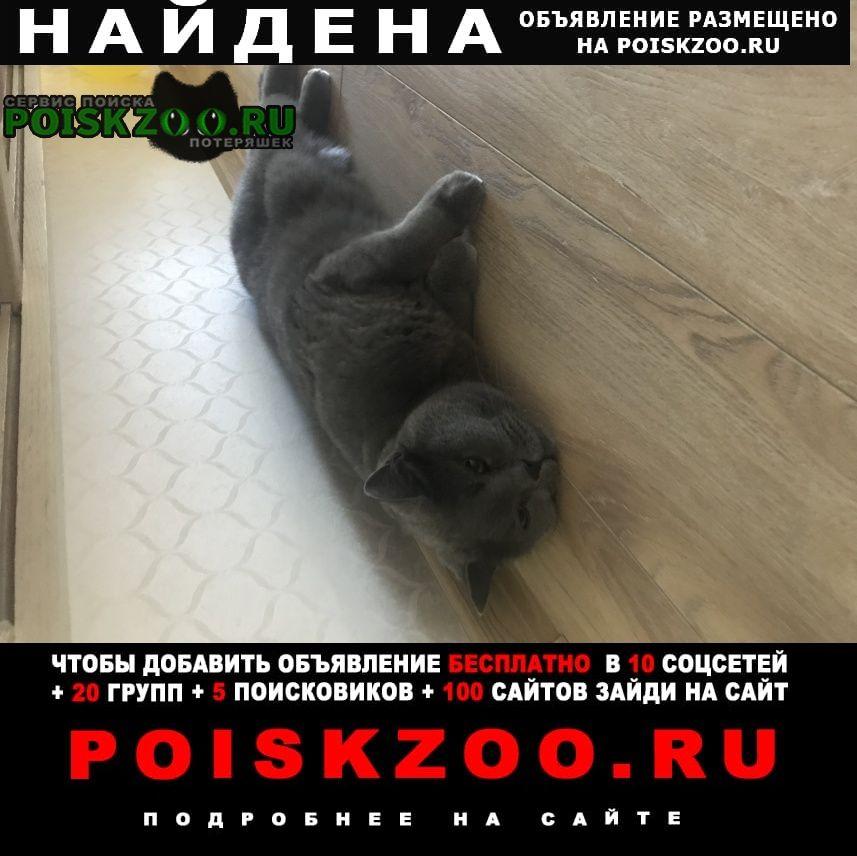 Найден кот Кемерово