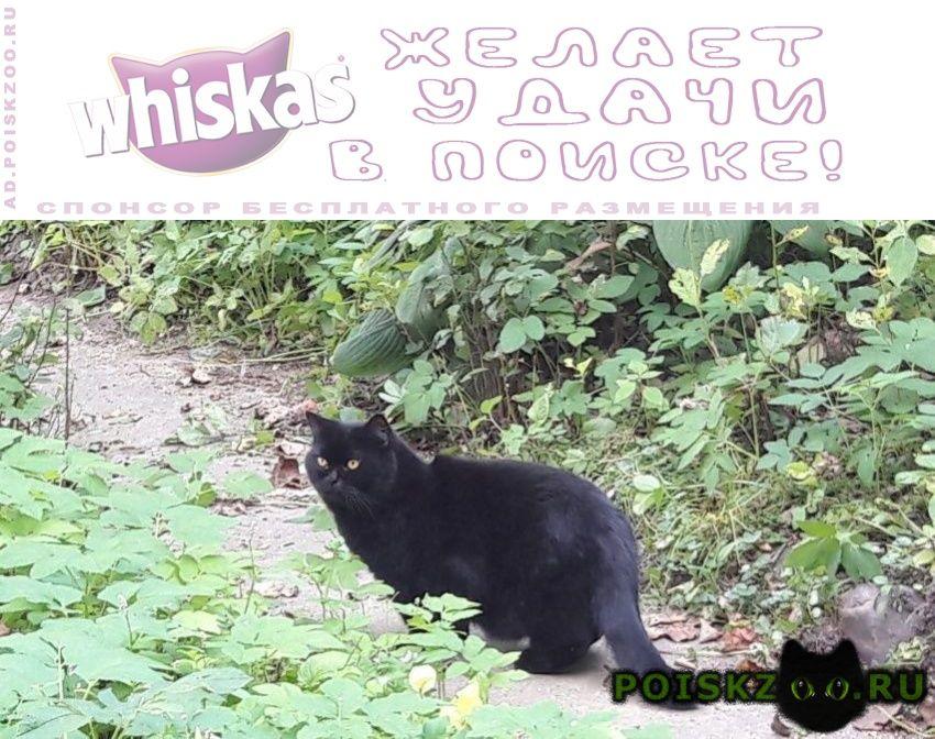 Найден кот г.Апрелевка