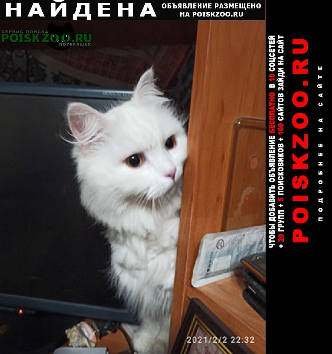 Найдена кошка мкр. сакраменто Балашиха