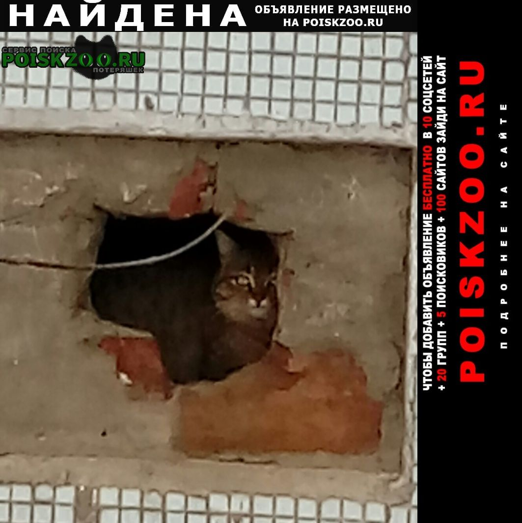 Найдена кошка серого цвета Чехов
