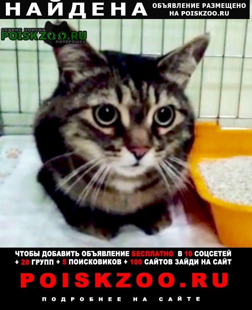 Найден кот кастрат Красногорск