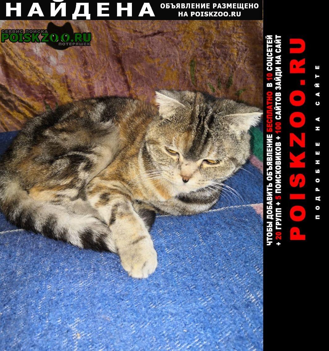 Найдена кошка породистая Саратов