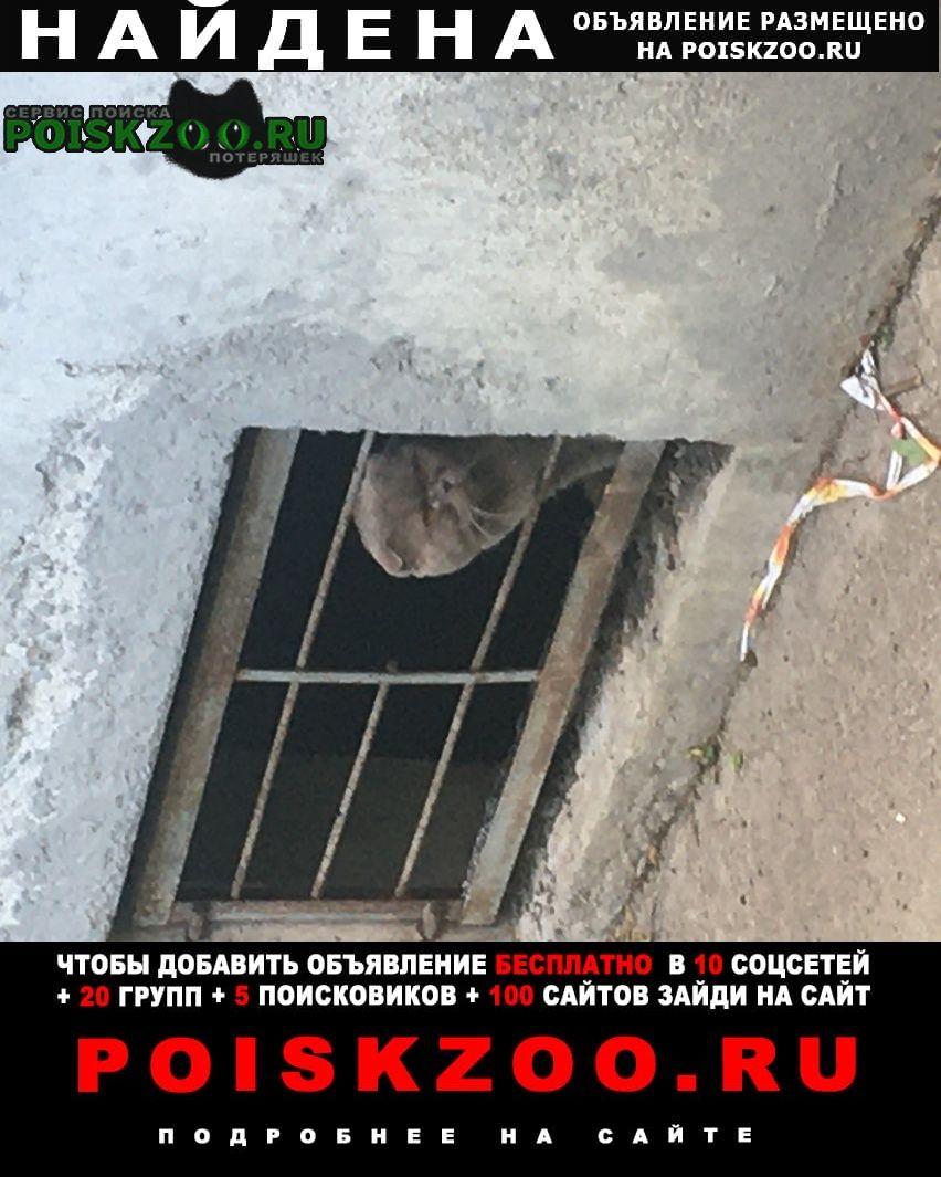 Найдена кошка или кот Санкт-Петербург