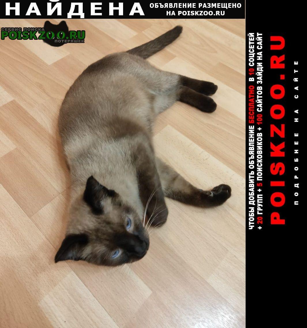 Найдена кошка сиамская Хабаровск