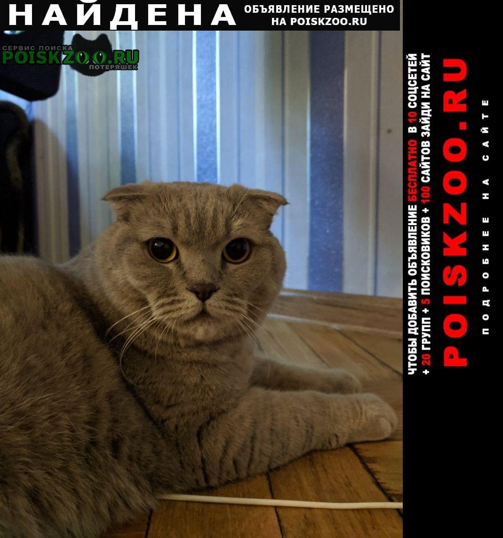 Найден кот 22.06 светло-серый вислоухий Санкт-Петербург