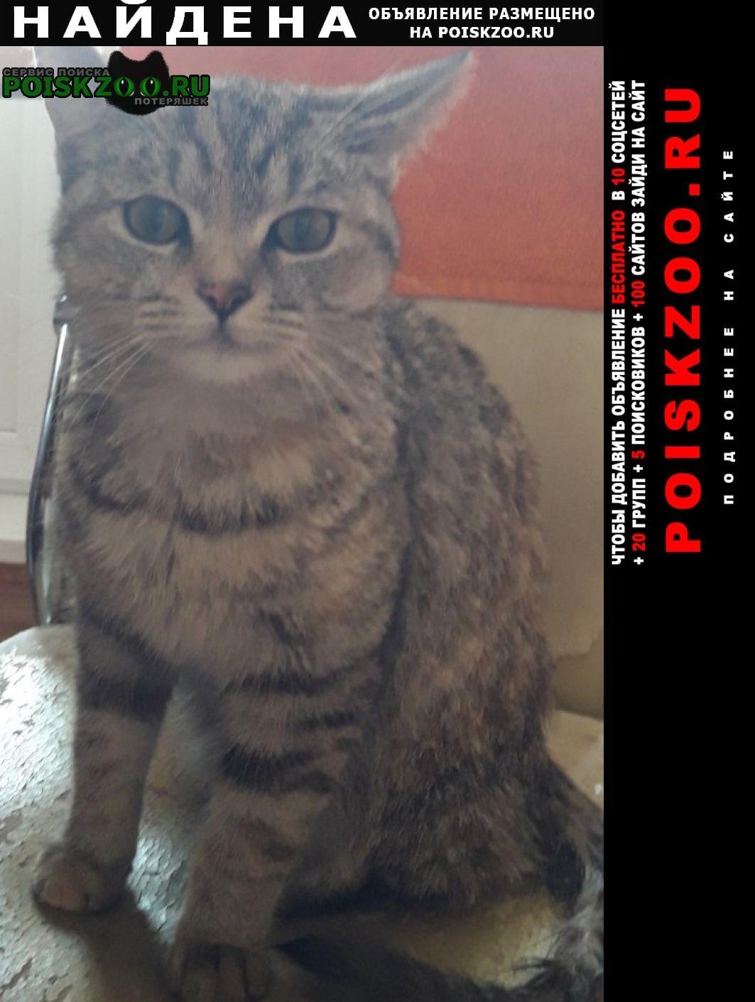 Найдена кошка университетская 14 Чебоксары